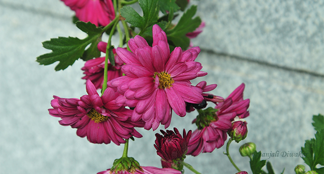 munnar-flower-14