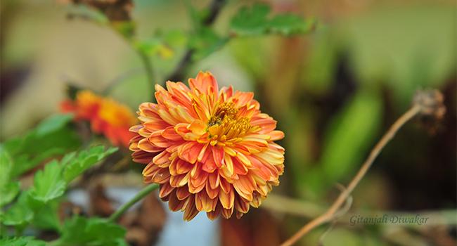 munnar-flower-15