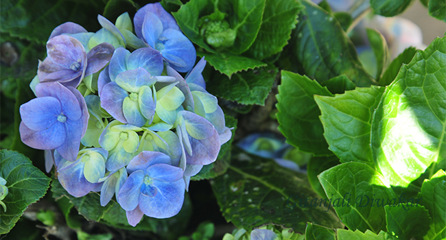 munnar-flower-3