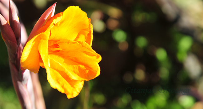munnar-flower-4