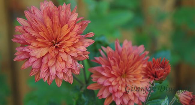 munnar-flower-6