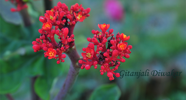 munnar-flower-7