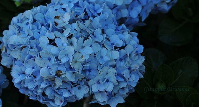munnar-flower-9